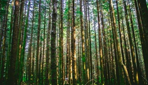 ことわざ『木を見て森を見ず』から考える理想の追求と実現性について